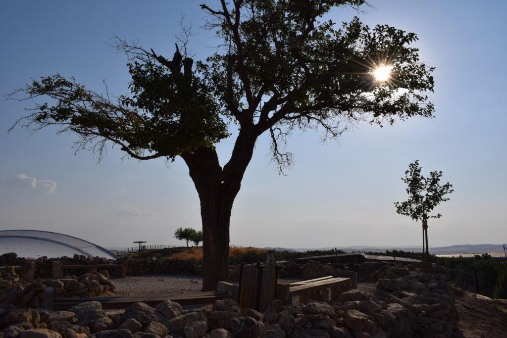 Dilek Ağacı, Şanlıurfa