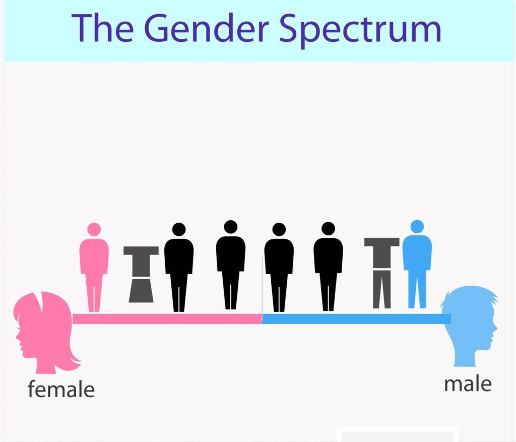 Cinsiyet Spektrumu